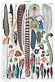 Types de plumes. - Larousse pour tous, -1907-1910-.jpg