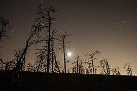 Tyresta National Park near Stockholm – site of the 1999 forest fire.jpg