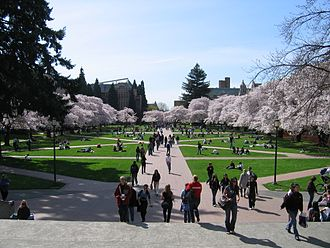 Campus of the University of Washington - Cherry trees in bloom in the Quad.