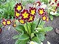 Unknown flower-6.jpg