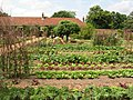 Vegetable garden at Ham House Estate - geograph.org.uk - 4530.jpg