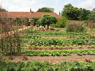 Vegetable - Domestic vegetable garden in London