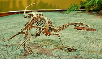 Velociraptor - Mounted V. mongoliensis cast at Wyoming Dinosaur Center