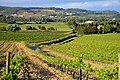 Viñedos en el Alt Penedès, Torrelles de Foix.jpg