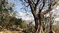 Via Jabillar - panoramio (18).jpg