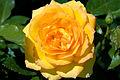 Victoria Gold (4492479673).jpg