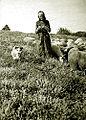 Vieille bergère sur le plateau d'Albion.jpg