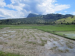 View to Mt Curi from Manatuto ricefields, Timor-Leste 13 Apr 2013.jpg