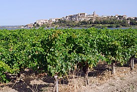 Vignoble à Bages.jpg