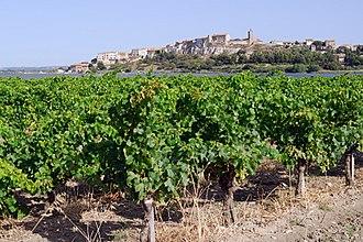 Bages, Aude - Image: Vignoble à Bages