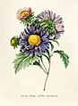 Vintage Flower illustration by Pierre-Joseph Redouté, digitally enhanced by rawpixel 74.jpg