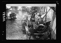 Vintage activities at Richon-le-Zion, Aug. 1939. Grapes going into the hopper for crushing LOC matpc.19776.jpg