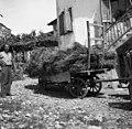 Voz s škalirjem, naložen na pol s pšenico, peljejo na Dobrovo v mlatilnico 1953.jpg