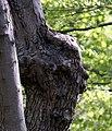 WE Face on a tree (5534661900).jpg