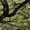 Waimea Valley Park (12604498944).jpg