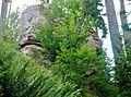 Wald bei Pfalzgrafenweiler - panoramio (1).jpg