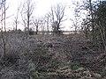 Walk Plantation - geograph.org.uk - 1135948.jpg