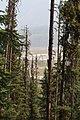 Wapta Falls Trail IMG 4995.JPG