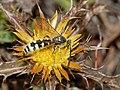 Wasp August 2010-5.jpg