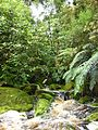 Waterfall near Oparara Arch 1.JPG