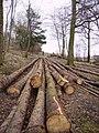 Wegber Plantation - geograph.org.uk - 139514.jpg