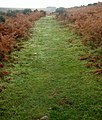 Well trod path^ - geograph.org.uk - 138425.jpg