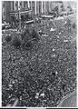 West Germans Demonstrating - Flickr - The Central Intelligence Agency.jpg