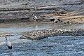 Western Serengeti 2012 06 03 3719 (7557814706).jpg