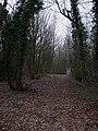Westlain Plantation - geograph.org.uk - 1153844.jpg