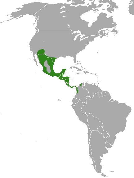 White-nosed Coati area