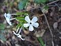 Whiteflowers4.jpg