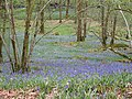 Whitehowe Wood.jpg