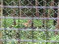 Wildlife Safari - 2.jpg