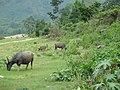 Wildlife in Tang Hpre village near Myitsone Dam project area.jpg