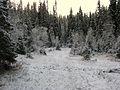 Winter-boreal-forest-Trondheim.jpg