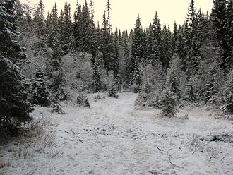 Trondheim - Early winter in the hills near the city. Trondheim municipality covers large areas outside the city itself.