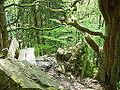 Wittgensteiner Schieferpfad 01.jpg