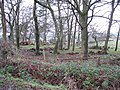 Woodland, Easter Rigghead - geograph.org.uk - 1120229.jpg