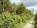 Woodland Alongside A50 - geograph.org.uk - 11960.jpg