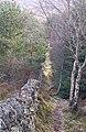 Woodland track - geograph.org.uk - 341660.jpg