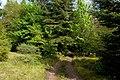 Woodland track above Brodick Castle - geograph.org.uk - 1320915.jpg