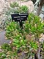 World Deserts - US Botanic Gardens 36.jpg