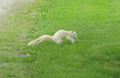Wsquirrel.png