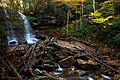 Wv-forest-waterfall-fall-foliage-logs-rocks - West Virginia - ForestWander.jpg
