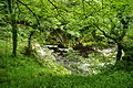 Yew Tree Gorge (7525).jpg