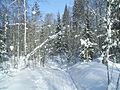 Zimny les.JPG