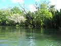 """""""Overhanging Mangrove Trees"""".jpg"""