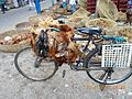 'Chickens' transported on cycle..JPG