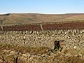 (Blocked up) sheephole in drystone wall on Red Road - geograph.org.uk - 703090.jpg