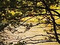 (PL) Polska - Warmia - Ścieżka nad jeziorem Długim w Lesie Miejskim w Olsztynie - Path on the Long Lake in the City Forest in Olsztyn (9.X.2012) - panoramio (10).jpg